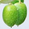 オリーブオイルの成分や効能・効果は?